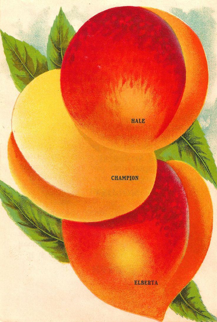 Peach clipart vintage Varieties Vintage Ice 3 Vintage