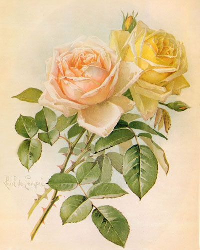 Peach clipart vintage Images yellow Roses Best Graphics:
