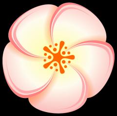 Peach Flower clipart Free Flower Clip  Peach