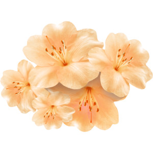 Peach Flower clipart orange VerenaDesigns_EverythingBloomsInSpring_el13 png Polyvore Flowers