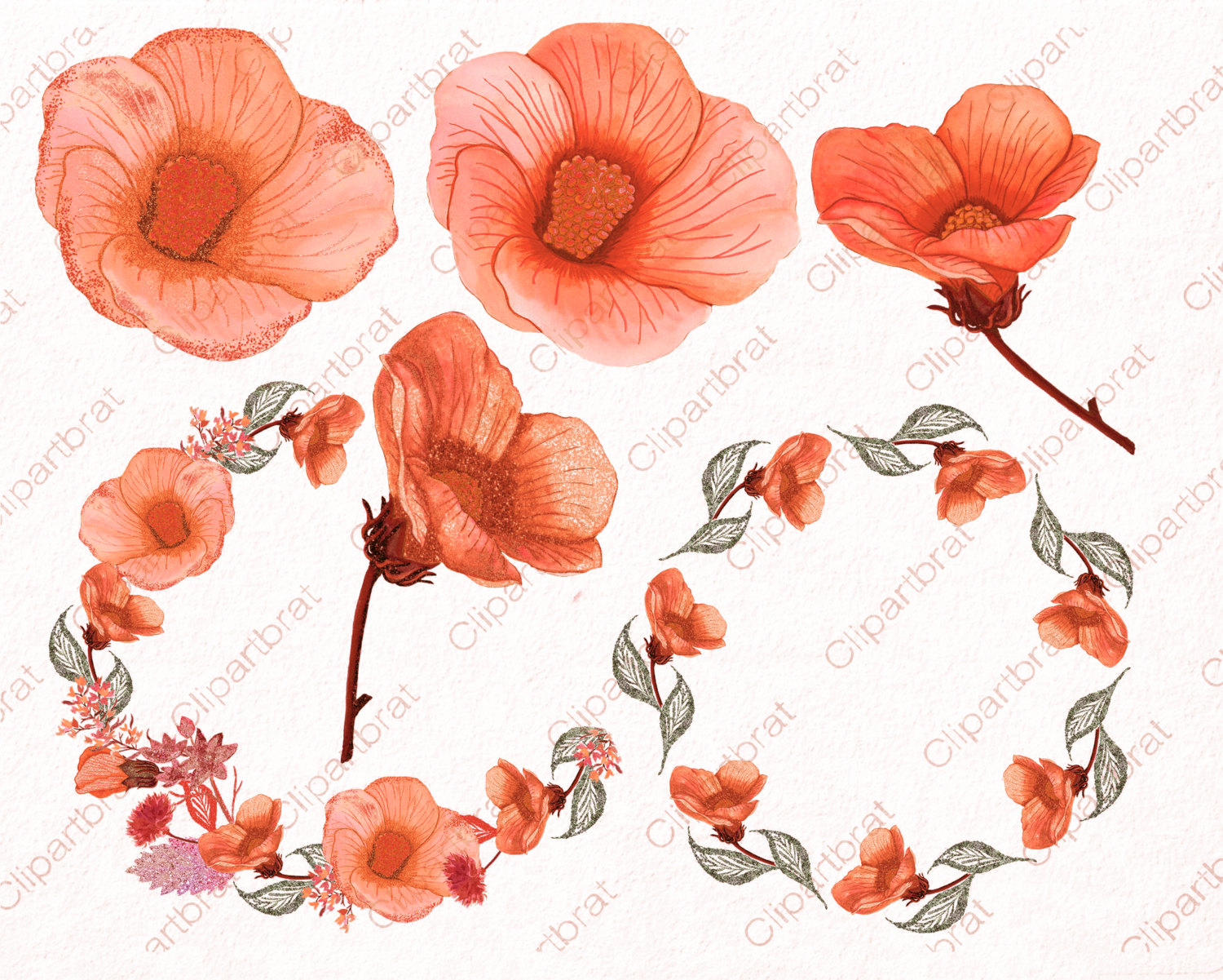 Peach Flower clipart orange HIBISCUS Commercial Autumn PEACH HIBISCUS