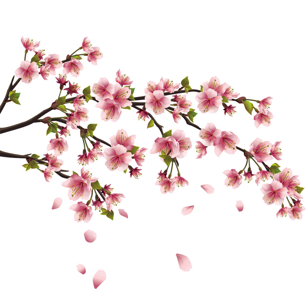 Peach Flower clipart peach blossom Best 3 flower background background