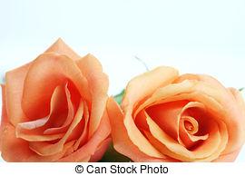 Peach Flower clipart peach color Peach Stock Peach Peach and