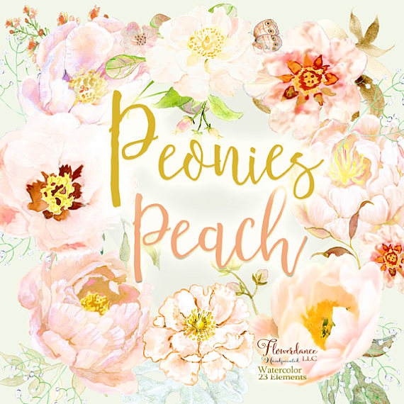 Peach Flower clipart peony Peony peony clipart clipart clipart