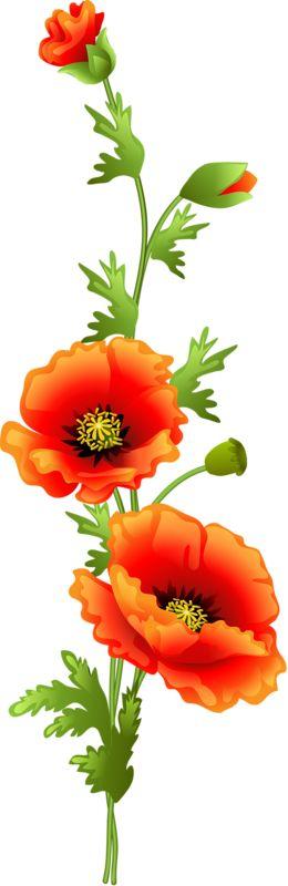 Red Flower clipart poppy flower #11