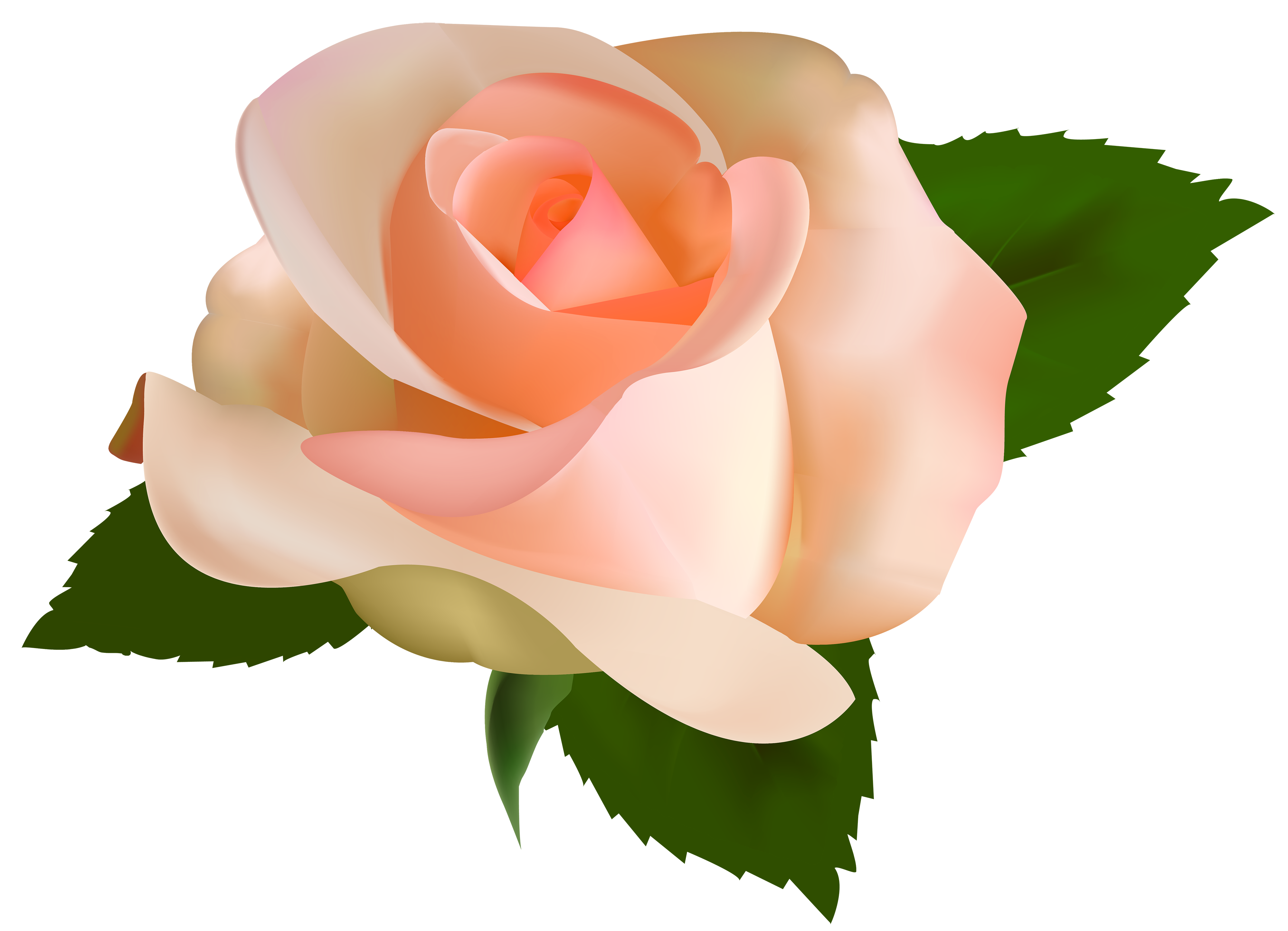 Beautiful clipart rose plant Clipart WEB Beautiful PNG Clipart