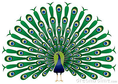 Peacock clipart fotosearch Peacock Cliparting Clip com clipartfest