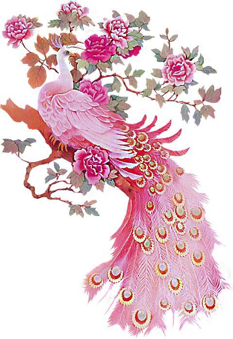 Peacock clipart bird flower Best Pink Pretty on Pinterest