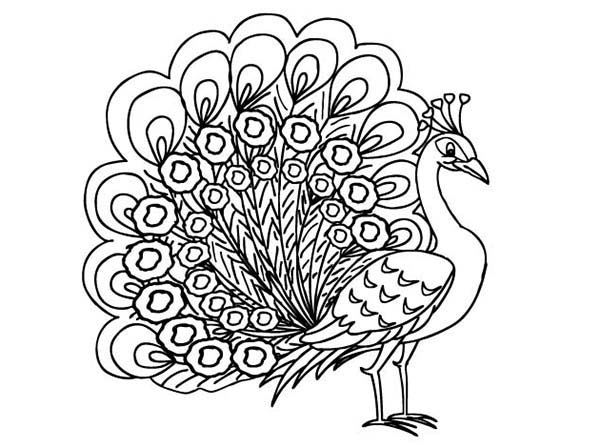 Drawn peacock coloring page Peacock a Peacock Peahen Female