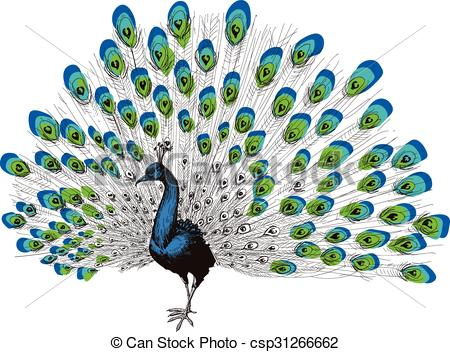 Peacock clipart free hand drawing Drawing  hand Art of