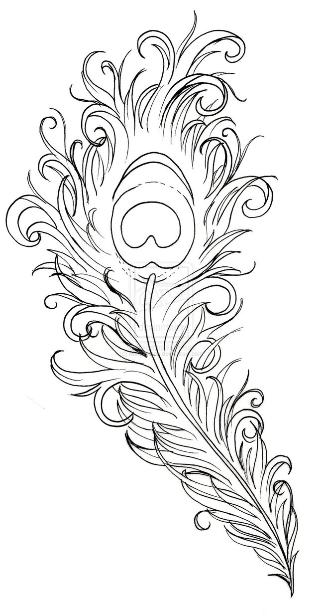 Drawn peacock peacock tail Peacock Tattoo  Peacock+Feather+Drawing by