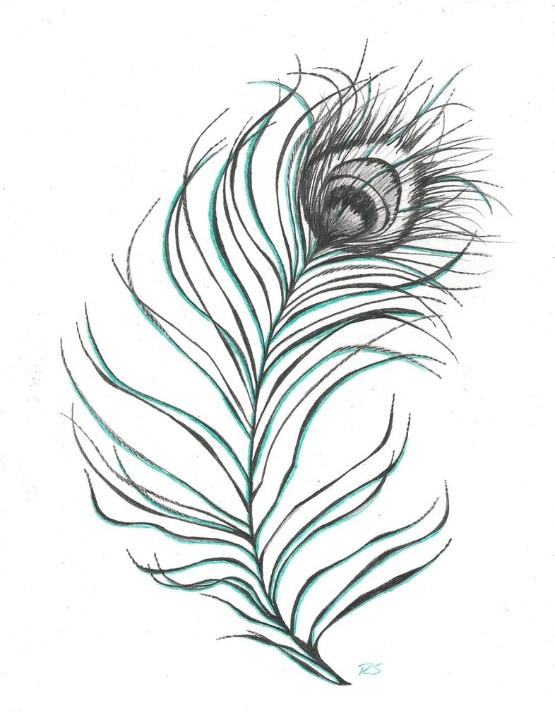 Drawn peacock peacock tail Feather meaning Ideas Tattoo on