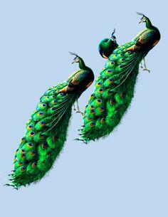 Peacock clipart small Cutout PAVOREAL Bird Peacock Cartoon