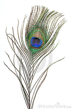 Peacock clipart transparent Clipart feathers Eyes Art Feathers