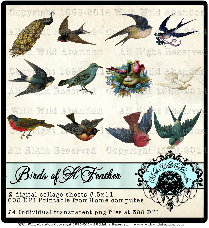 Peacock clipart victorian Art Collage Illustrations Digital Sheet
