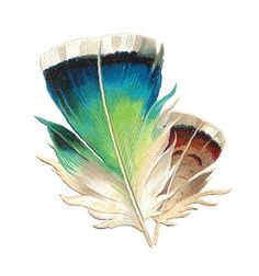 Peacock clipart victorian Design 2 Feathers Graphic: Tricolored