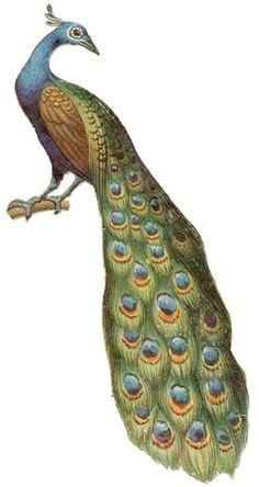 Peacock clipart victorian 1917 Antique Shoe Illustrations Images: