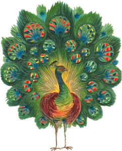 Peacock clipart victorian Graphics Art Victorian png Peacock