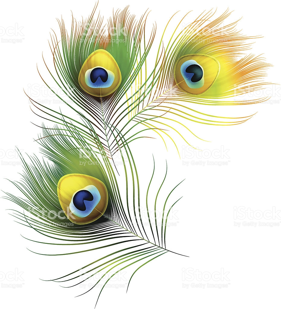 Peacock clipart white background Background no Peacock Peacock clipart