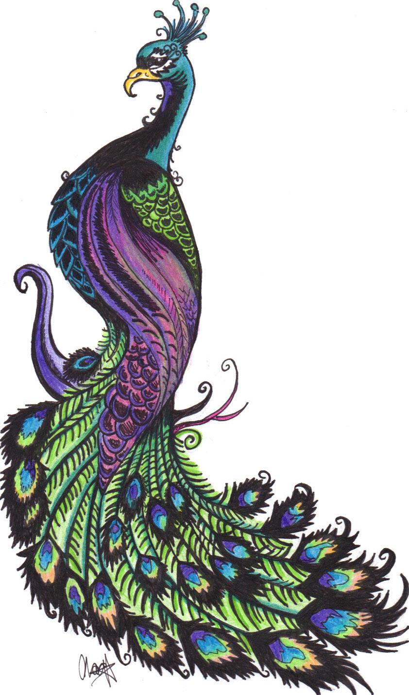 Animl clipart peacock Best Art Art Pinterest ClipArt