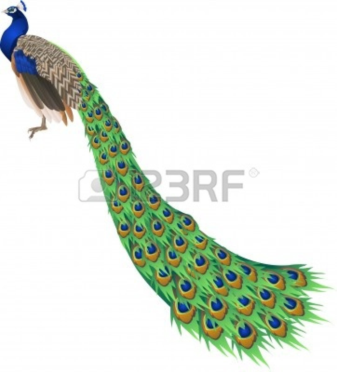 Peafowl clipart indian peacock Clipart Border Feather peacock%20feather%20clipart%20black%20and%20white Clipart