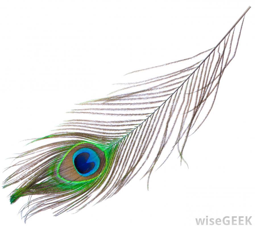 Drawn peacock peacock tail On Free Free Louis Peacock