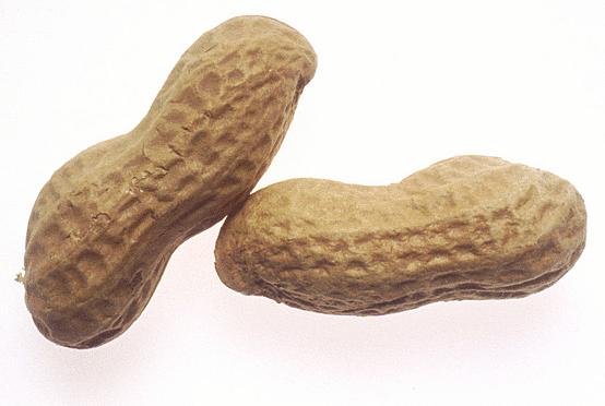 Nut clipart peanut shell Peanut Clipart Sylvester Georgia cliparts