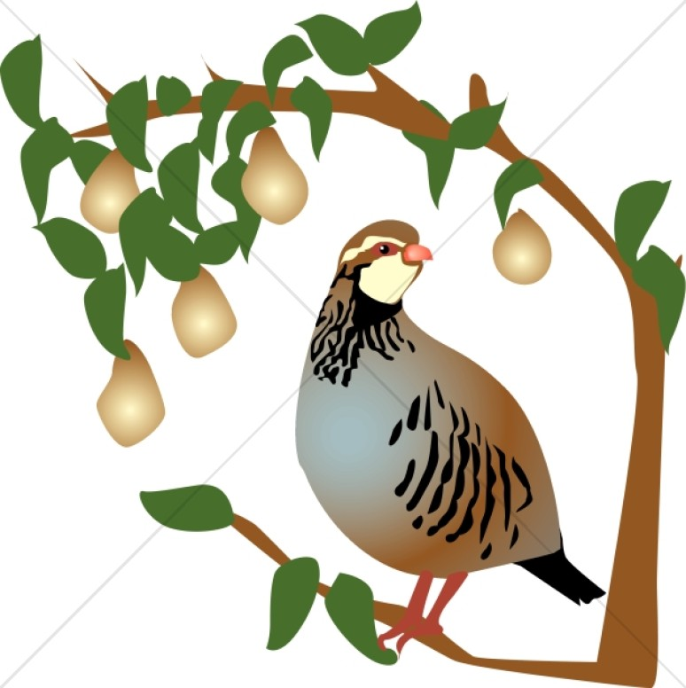 Bird clipart partridge Religious Partridge Tree Clipart in