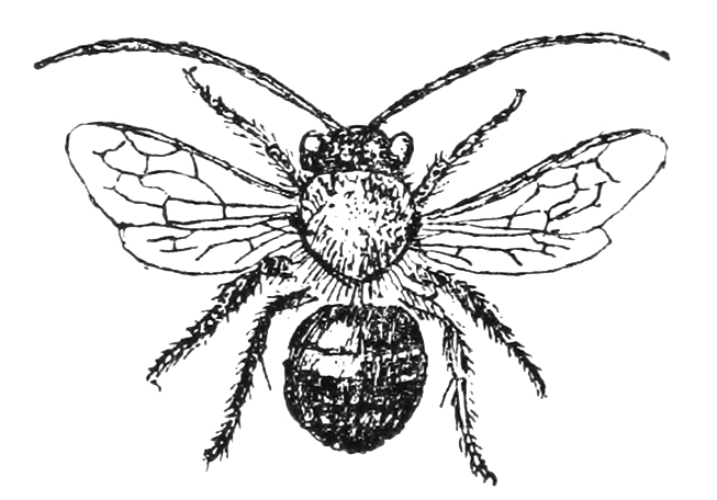 Bees clipart vintage Graffical Science Muse The Archives