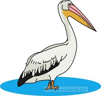 Pelican clipart PELICAN : jpg Birds Clipart
