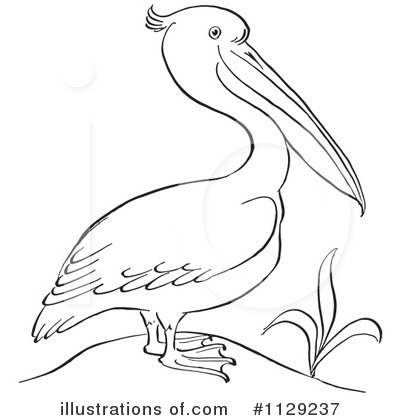 Pelican clipart black and white Royalty Free (RF) Picsburg by