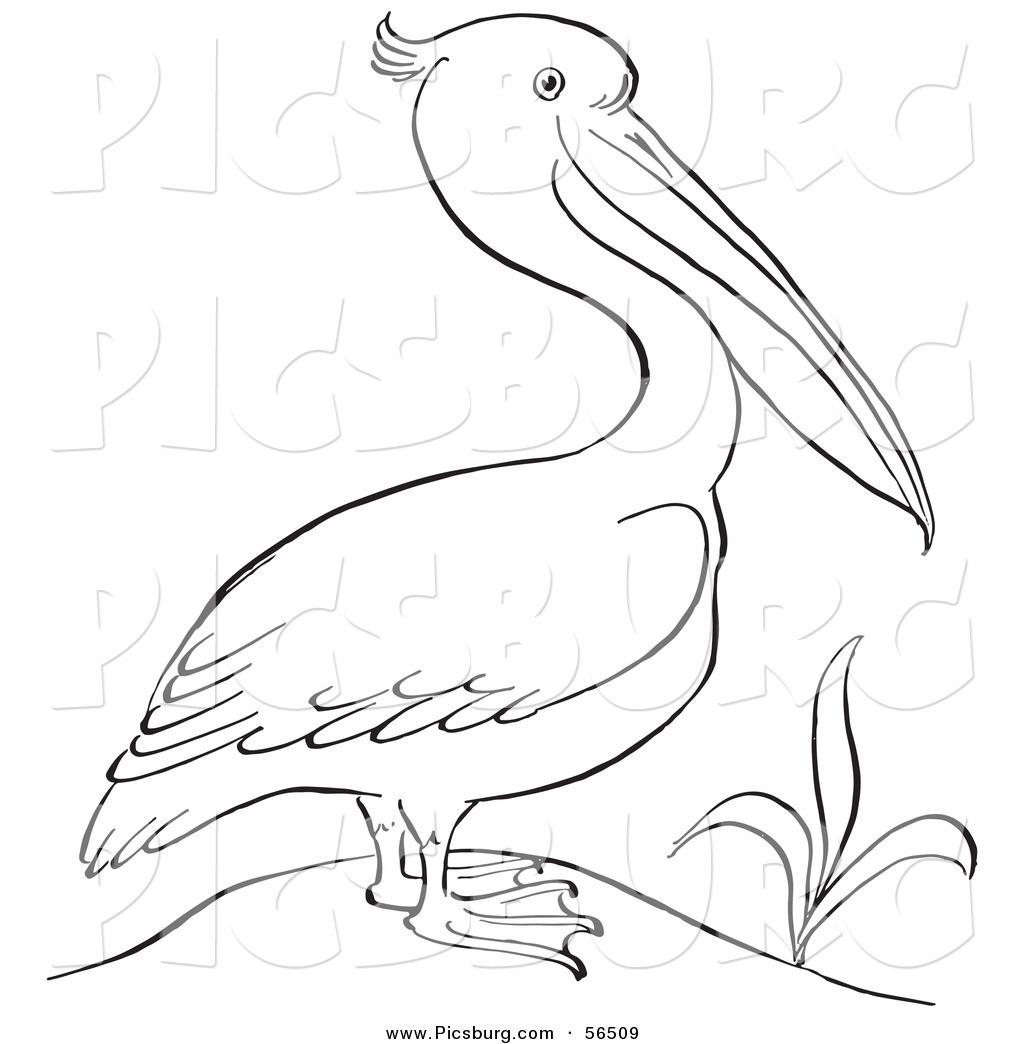 Pelican clipart black and white A Clip Plant Black Art