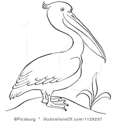 Pelican clipart head IDEAS ART Drawings best about