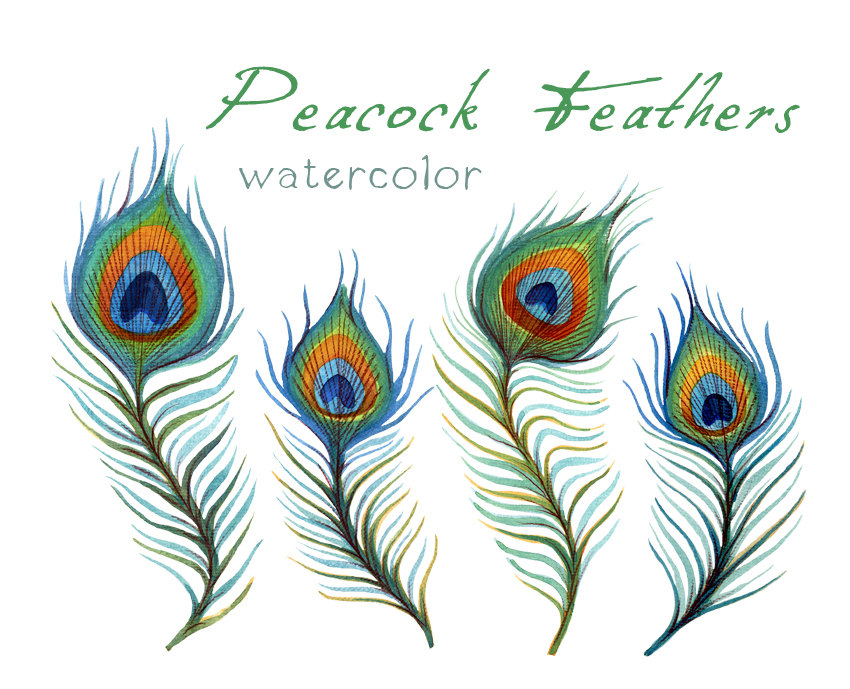 Pen clipart peacock feather Feather Etsy Digital Feather Art
