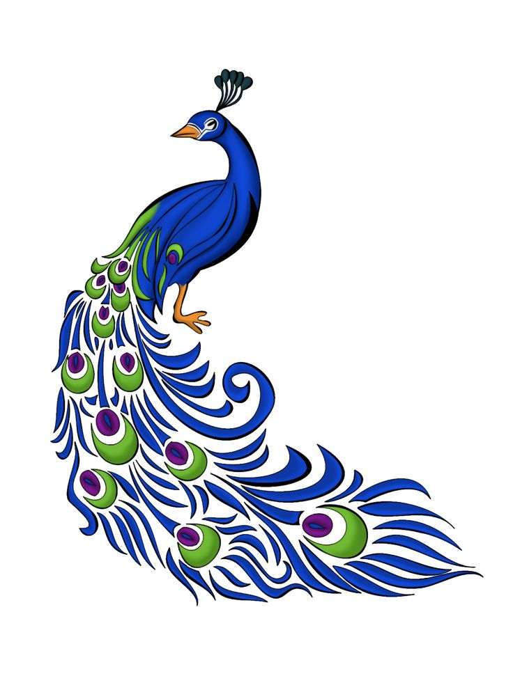 Pen clipart peacock feather Graphics drawing Free on Peacock