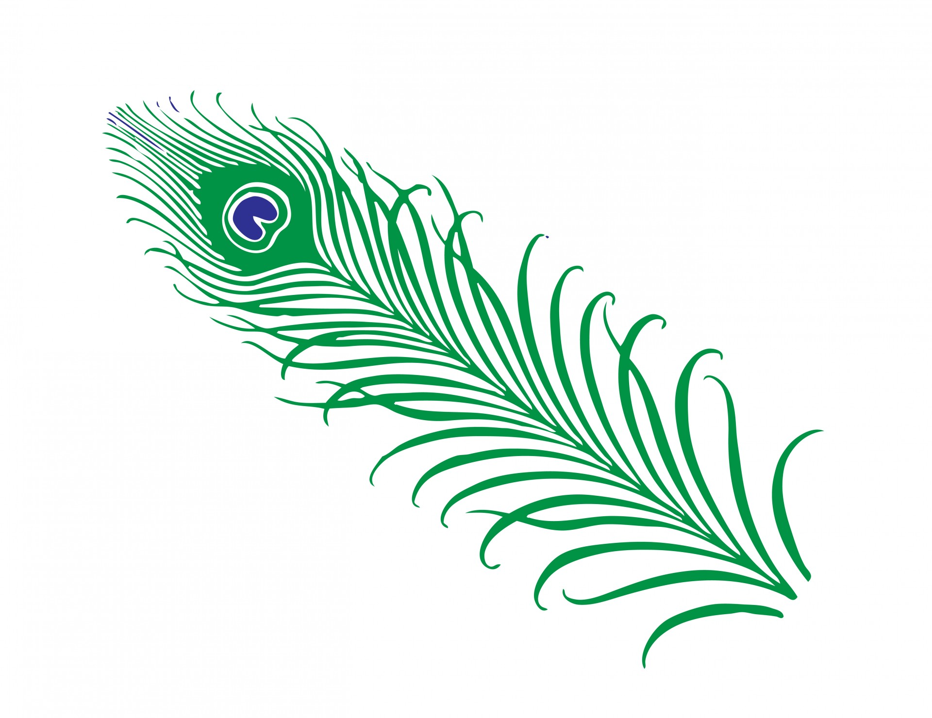 Pen clipart peacock feather Feather Clipart  Feather 1