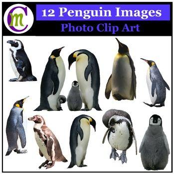Penguin clipart realistic Images Unit Clip Teaching best