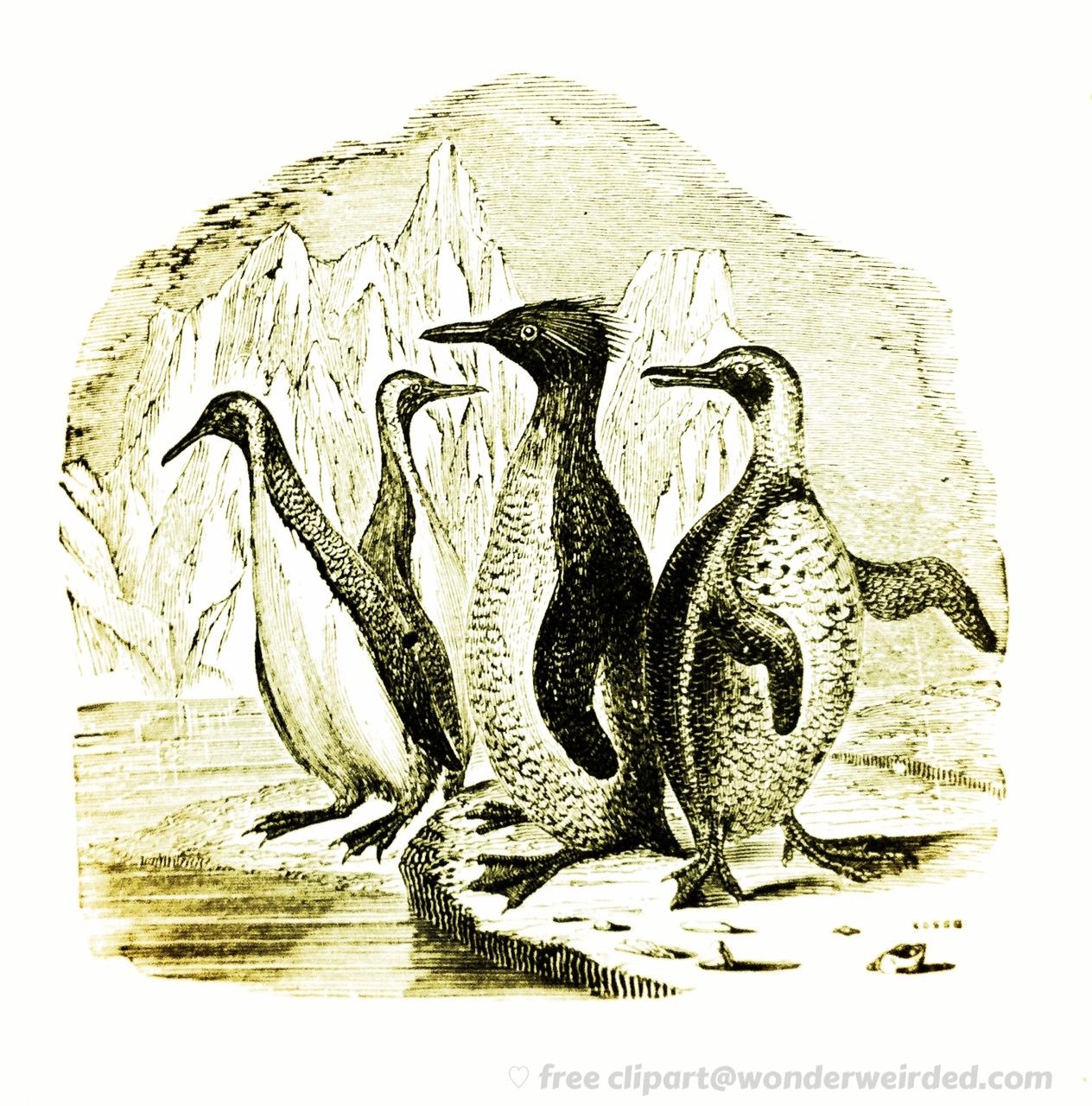 Penguin clipart vintage Art of Illustration Wonderweirded Engraving