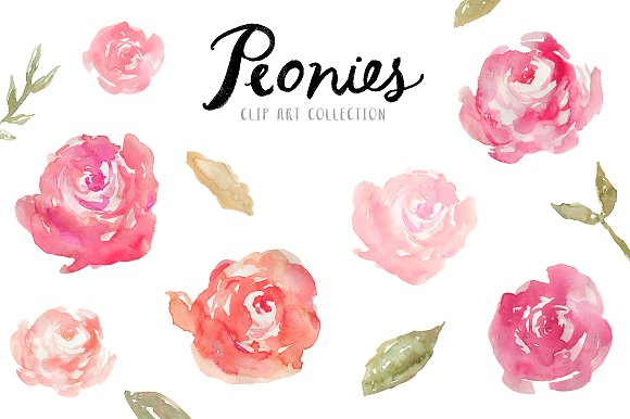 Peony clipart peony flower On ~ Creative Illustrations Watercolor