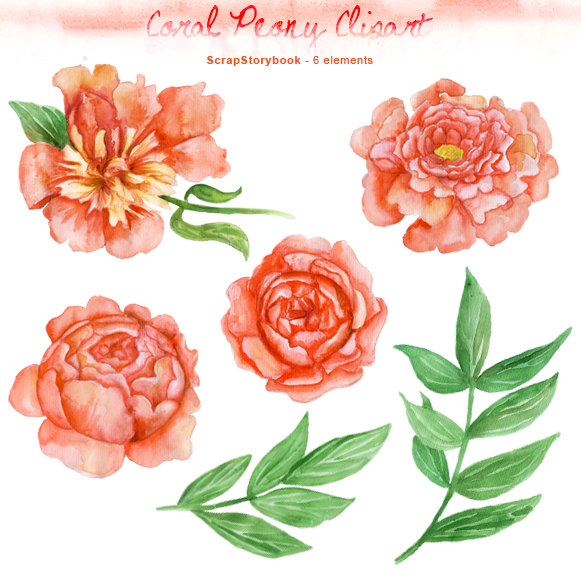 Peony clipart abstract flower Transparent Etsy Watercolor PNG dpi
