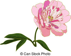 Peony clipart abstract flower Illustrations vector EPS Vector Stock