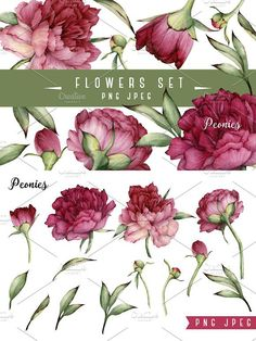 Peony clipart abstract watercolor Set watercolor and Watercolors