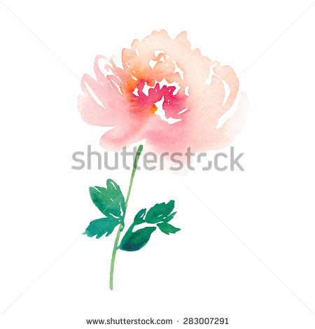 Peony clipart abstract watercolor  Hand stock watercolor Hand