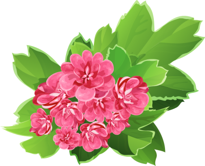 Pink Flower clipart real Art of floral flowers Flower