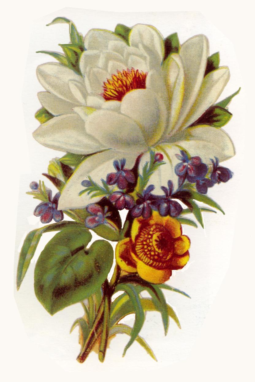 Beautiful clipart boquet Of bouquets Clip Art: flowers
