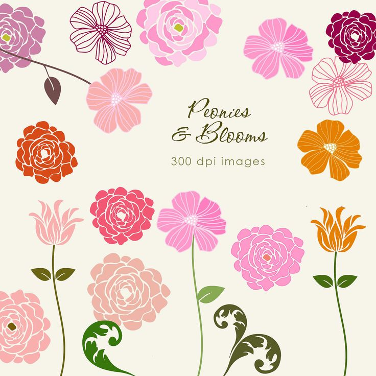 Peony clipart logo Search images clipart about Pinterest