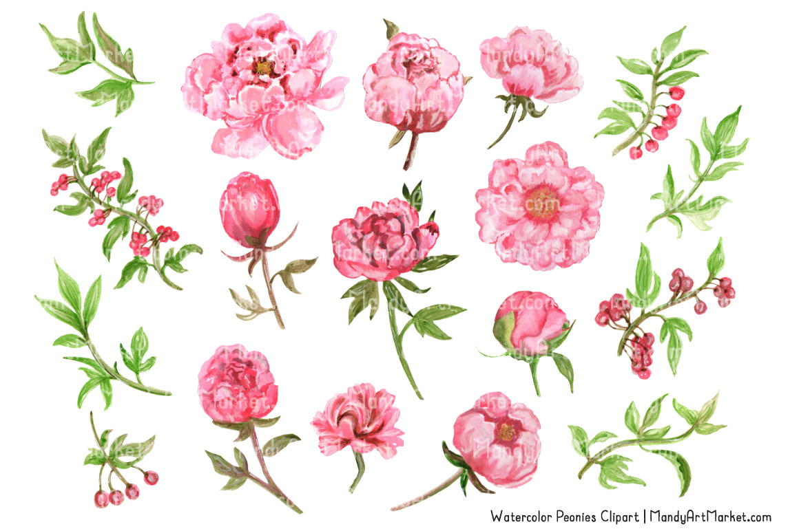 Peony clipart pink peony TheHungryJPEG by Peonies Clipart Pink