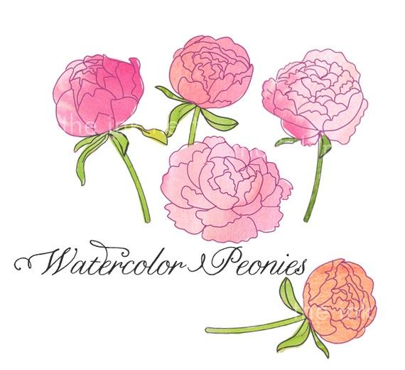 Iiii clipart rose Peonies about How best on