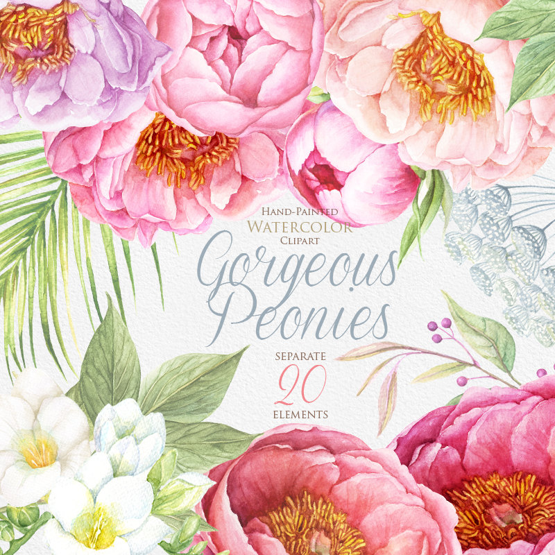 Peony clipart watercolor flower  BOHO Watercolor Clipart painted