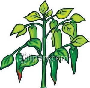 Plant clipart pandan  clipart clipart 162 #1